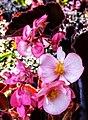 Butchart Gardens - Victoria, British Columbia, Canada (28659756704).jpg