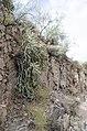 Butcher Jones Trail to Pinter's Point Loop, Tonto National Park, Saguaro Lake, Ft. McDowell, AZ - panoramio (165).jpg