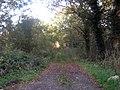 Byway off Hornash Lane - geograph.org.uk - 1559873.jpg