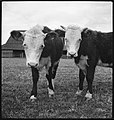 CH-NB - USA, Gruetli-TN- Farm - Annemarie Schwarzenbach - SLA-Schwarzenbach-A-5-10-146.jpg