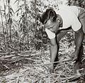 COLLECTIE TROPENMUSEUM Man aan het werk in een bamboebos TMnr 60052402.jpg