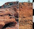 CSIRO ScienceImage 3832 Red Sodosol soil profile near Coober Pedy South Australia.jpg