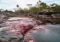 Caño Cristales, Colombia (38828022505).jpg