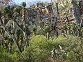 Cadereyta Botanical garden (5761440270).jpg