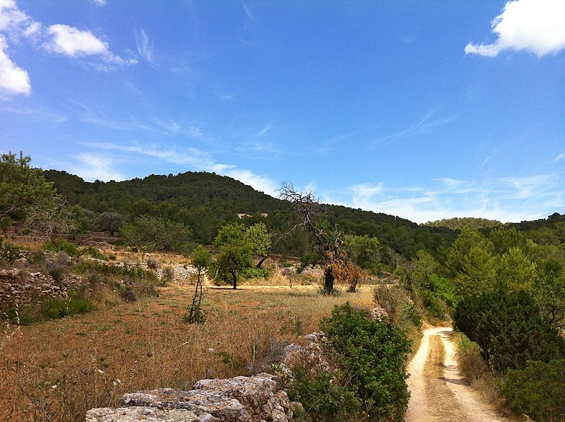 File:Camps de secà entre can Vedraner i can Germà - panoramio.jpg