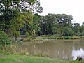 Capenhurst - fishing pond in Big Wood - geograph.org.uk - 253871.jpg
