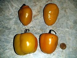 Capsicum pubescens fruit.jpg