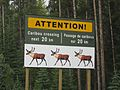 Caribou Crossing (3866015291).jpg