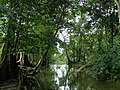 Cascada Roberto Barrios 03.jpg