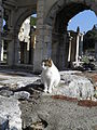 Cat among the ruins, Ephesus, Turkey (7230519768).jpg