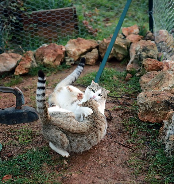 "Cats games. Enclosure of feline - Animal Freedom ""Animal Liberté"" Cat's Protection shelter."