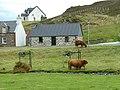 Cattle at Duirinish - geograph.org.uk - 808086.jpg