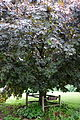 Central Tree - Rutland, Massachusetts - DSC07237.JPG