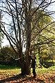 Cercidiphyllum japonicum JPG1Ac.jpg