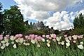 Chelsea Physic Garden 15052013 074.jpg