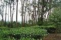 Chembra Peak, Wayanad - panoramio (4).jpg
