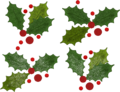 Christmas ilex variations.png