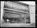 Churchtown vicinity, Lancaster County, Pennsylvania. Tobacco hanging in a barn, 1938. Sheldon Dick, U.S. Farm Security USLOC pubdom.jpg