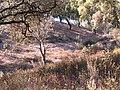 Cierva - panoramio.jpg