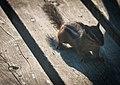 Cloud Bay Chipmunk, Cloud Bay (14748600520).jpg