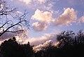 Clouds 021611-1 (5452719594).jpg