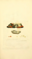 Coloured Figures of English Fungi or Mushrooms - t. 180.png