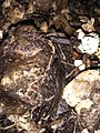 Compost with worms.jpg