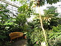 Cool Temperate House - Lyman Plant House, Smith College - DSC04377.JPG