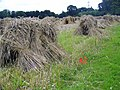 Corn Stooks near Bottlesford - geograph.org.uk - 1428235.jpg