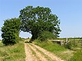 Country Road, Ampney St Mary CP - geograph.org.uk - 22408.jpg