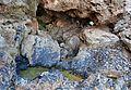 Cova Tallada, basseta i roques.JPG