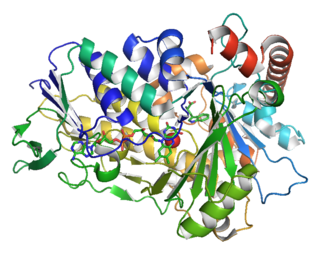 Tryptophan 7-halogenase class of enzymes
