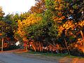 Curico, arboles cerro Condell (9011458106).jpg