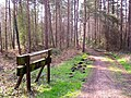 Cycle Track, Forest of Dean. - geograph.org.uk - 384129.jpg