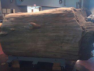 Wedell-Williams Aviation & Cypress Sawmill Museum - Patterson - Cypress log
