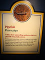 DSC28110, Pipefish, Monterey Bay Aquarium, Monterey, California, USA (4963682441).jpg
