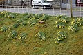 Daffodils on side of Lake Vyrnwy Dam - geograph.org.uk - 755351.jpg