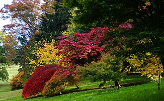 Dartington Hall - Autumn in the gardens