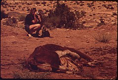 Dead Livestock Dropped near Moab City Dump. Carcasses Are Not Allowed in the Dump, 05-1972 (3814979500).jpg