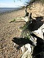 Dead tree - geograph.org.uk - 661787.jpg