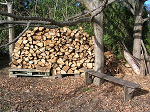 Different states of wood: tree, logs, pallet, ...