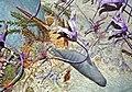 Diorama of a Devonian seafloor 3 (44899108854).jpg