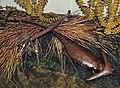 Diorama of a Permian forest floor - Diploceraspis 4 (31830715668).jpg