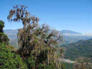 A moss-covered tree near Orosí, Costa Rica.