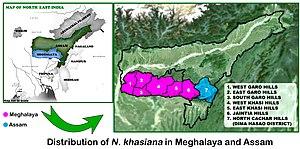 Nepenthes khasiana - Image: Distribution Map of N. khasiana in Meghalaya and Assam