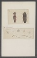 Diversen - Print - Iconographia Zoologica - Special Collections University of Amsterdam - UBAINV0274 023 14 0003.tif