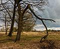 Dode tak aan een eik (Quercus robur). Locatie, natuurgebied Delleboersterheide – Catspoele 01.jpg