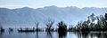 Dojran Lake 209.jpg
