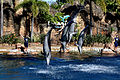 Dolphin Cove 63.jpg