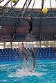 Dolphin show in Kyiv Dolphinarium.jpg